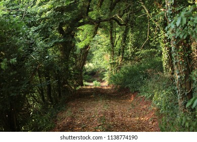 Devon woodland path