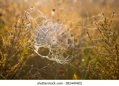 Dew covered spiderweb bathed in warm morning light