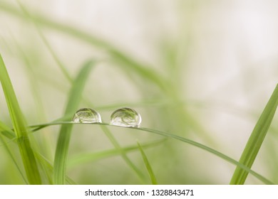 dew drop in early morning.