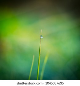 A dew drop in the morning close up