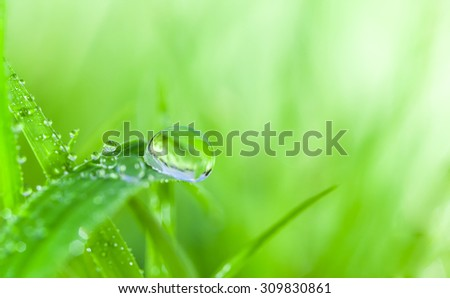 dew drop on grass.