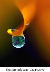 Dew drop on orange flower petal