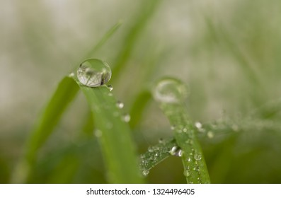 dew drop in winter.