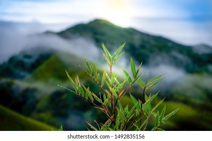 Dew drops hanging on little leaves and and  green Dzukou Valley (Nagaland,India) in the background.