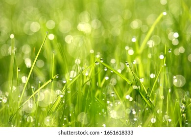 Dew drops on grass, macro photo early morning