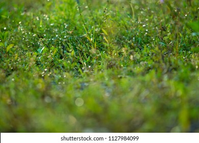 dew drops on grass in morning