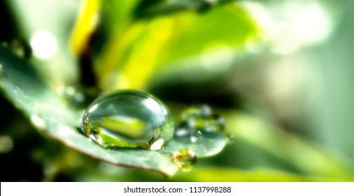 Dew drops on a green leaf defocused