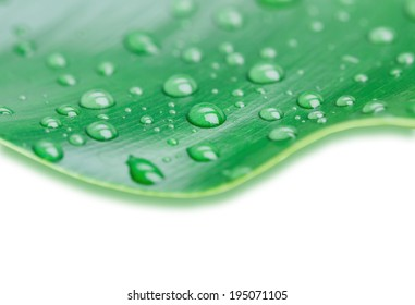 Dew drops on leaf isolated on white background