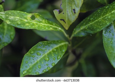 Dew drops on a tree leaves