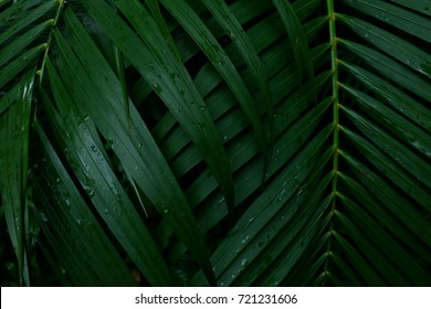 Dew and Green leaves background. Green leaves color tone dark  after raining in the morning. Tropical Plant , environment, photo concept nature and plant.