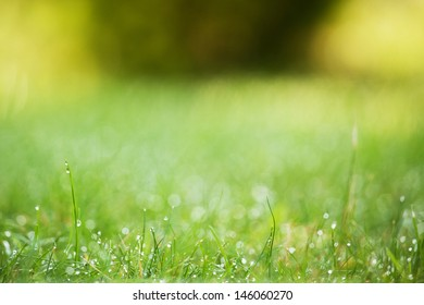 dew at the lawn