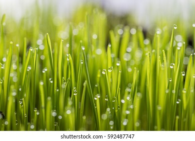 Dew on the grass.