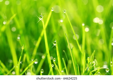 Dew on grass