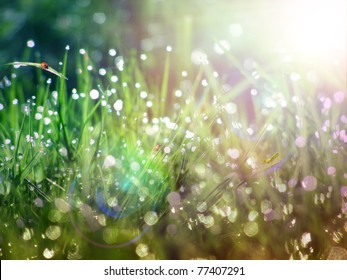 Dew on green grass under the morning sunlight