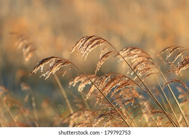 Dew on reed during a cold and wet spring sunrise.