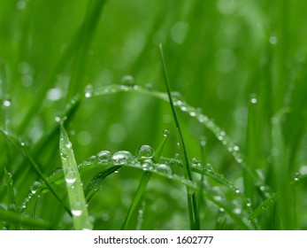 Dew - Water Drops on Foliage in the Morning