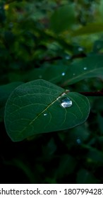 Dewdrop on a leaf in the fields during rainy day