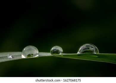 Dewdrops glittering in the sun on green grass