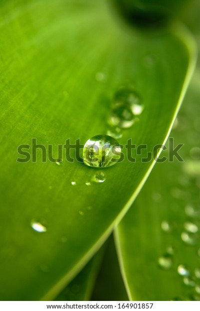 Dew/Raindrops on Leaves