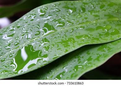 dews on the leaves