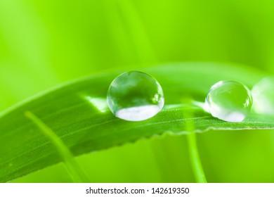 dews,dew drop,clear,water drop,drop,green