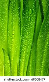 dewy leaves