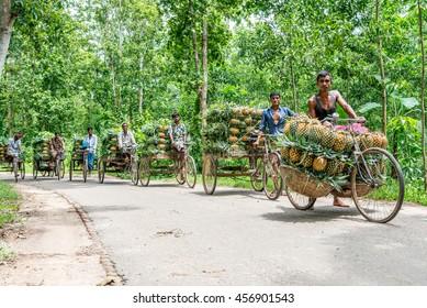 Dhaka, Bangladesh, July 22, 2016: sellers are preparing on the street to sell the pineapples at dhaka, bangladesh