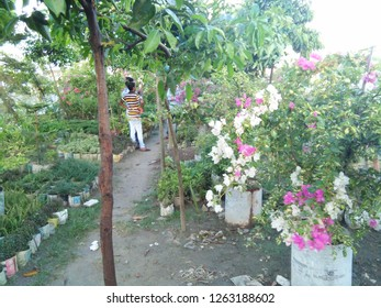 Plants Of Bangladesh Images Stock Photos Vectors Shutterstock