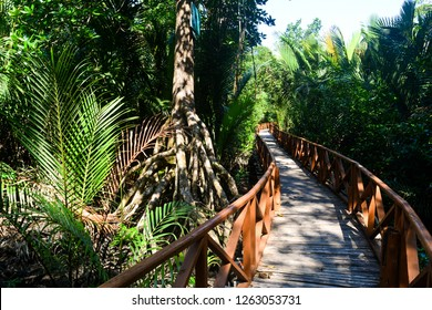 Dhani Nallah is a nature walkway and beach on the outskirts of Rangat, Middle Andaman Island, in the Andaman Islands. It is a 700 m wooden boardwalk through Mangroves.