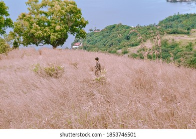 Dharmasraya / Indonesia - November 14 2020: A man was enjoying the view on the hill, seen around many very tall reed trees
