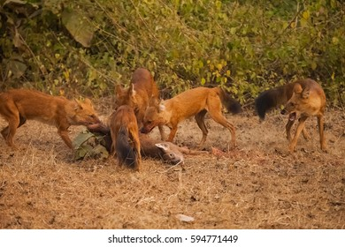 South Indian Dogs Images, Stock Photos & Vectors | Shutterstock