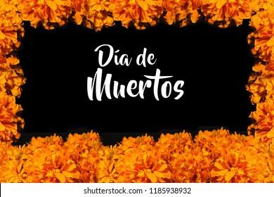 Dia De Los Muertos, flor de cempasuchil frame, Day of the Dead in México