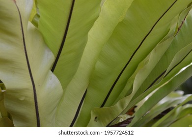 diagonal abstract pattern from  green fresh leaves background
