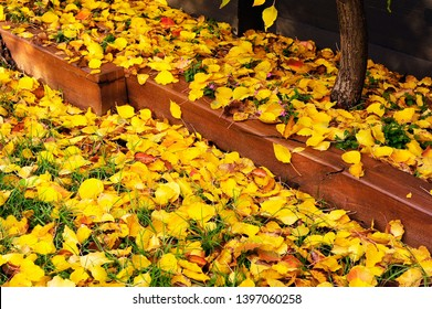 Diagonal Composition of Yellow Leaves and Brown Sleepers.A Garden bed forming a Bright Yellow Natural background, with Fallen leaves and Brown Sleeper.
