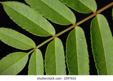 Diagonal leaf closeup