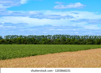 diagonal separating the fields on the green and yellow horizon in the background and the sky, summer time on the field before harvesting