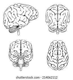 Diagram brain top side front back stock vector 208211470 shutterstock a diagram of a brain from the top side front and back in outline ccuart Images