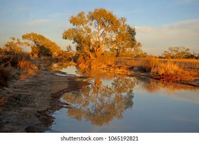 The Diamantina river at Birdsville, Queensland, Australia.