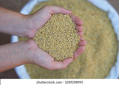 Diammonium phosphate (DAP),The typical formulation is 18-46-0,yellow color.fertilizer for plant in farmer hands.