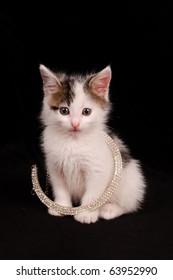 diamond kitten