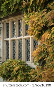 Diamond Leaded Elizabethan Style Windows Surrounded by Wisteria in Autumn Foliage