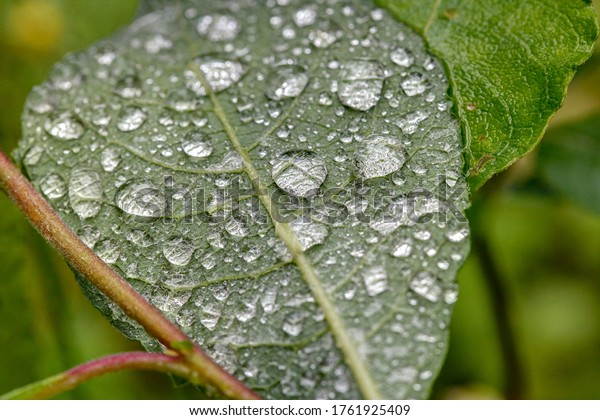 Diamonds of rain. The drops of water appear like diamonds on the back of a leaf after the rain.