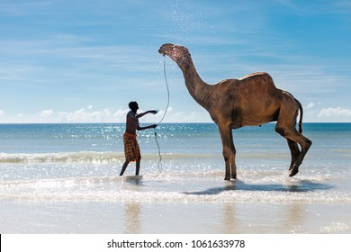 Diani Beach, Kenya - December 16, 2012: Kenyan man washing his camel in the ocean. Diani beach is the best-known sandy beach in Kenya, near Mombasa.