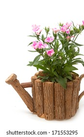 Dianthus Chinensis Flowers,China Pink, Indian Pink in flower pot
