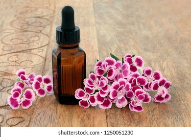 Dianthus herb flowers used chinese herbal medicine with aromatherapy essential oil bottle on rustic wood. Chinensis. Qu mai. Used to treat cystitis, as a diuretic & stimulates uterine contractions.