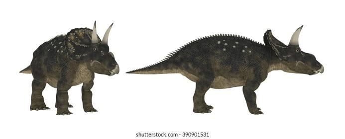 Diceratops. Dinosaur isolate on white  . 3d render