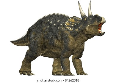 diceratops dinosaur roaring. A herbivorous dinosaur from the Maastrichtian age. Closeup head shot Isolated on white background. Clip art cutout illustration