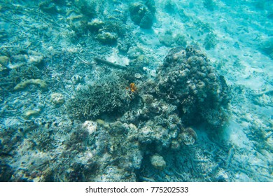 Died coral reefs and some of them still arrive, Palau, Pacific Ocean