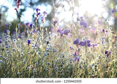 Died grass in forest - Shutterstock ID 1250442505