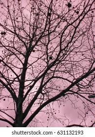 died tree silhouette